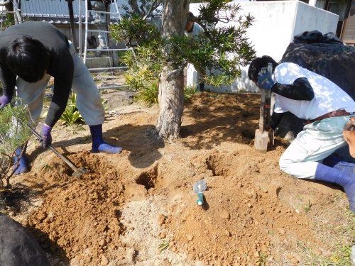 加西市 樹勢回復